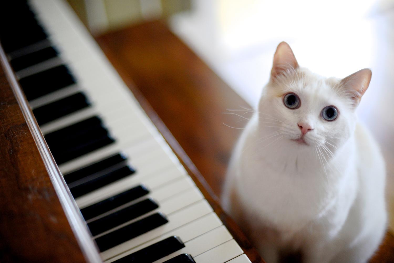 La música y los animales